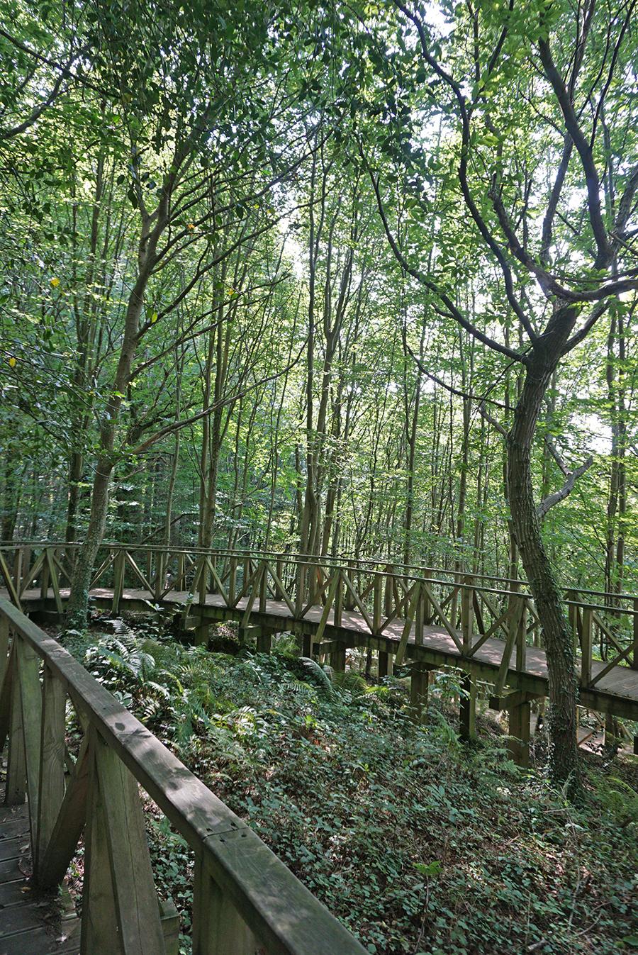 Ecotendencias: Baños de bosque